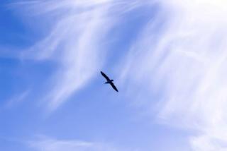 Freiheit und Selbstbestimmung sind die wichtigsten Menschenwünsche Twinli10