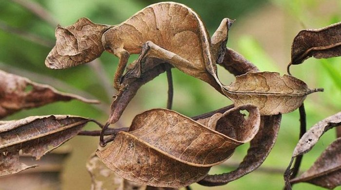 حيوانات تتغير على حسب طبيعة البيئة 15310