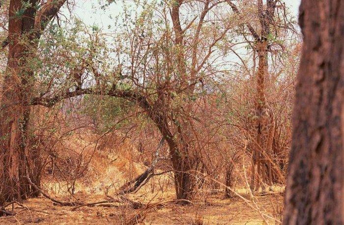 حيوانات تتغير على حسب طبيعة البيئة 21410