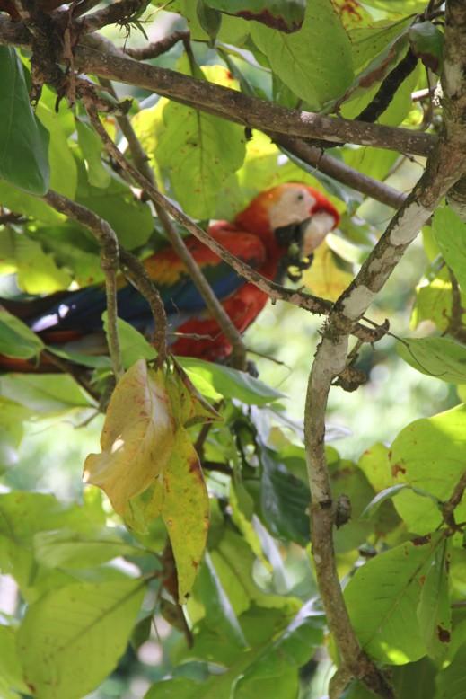 Géraldine Costa Rica 2013 Ara10