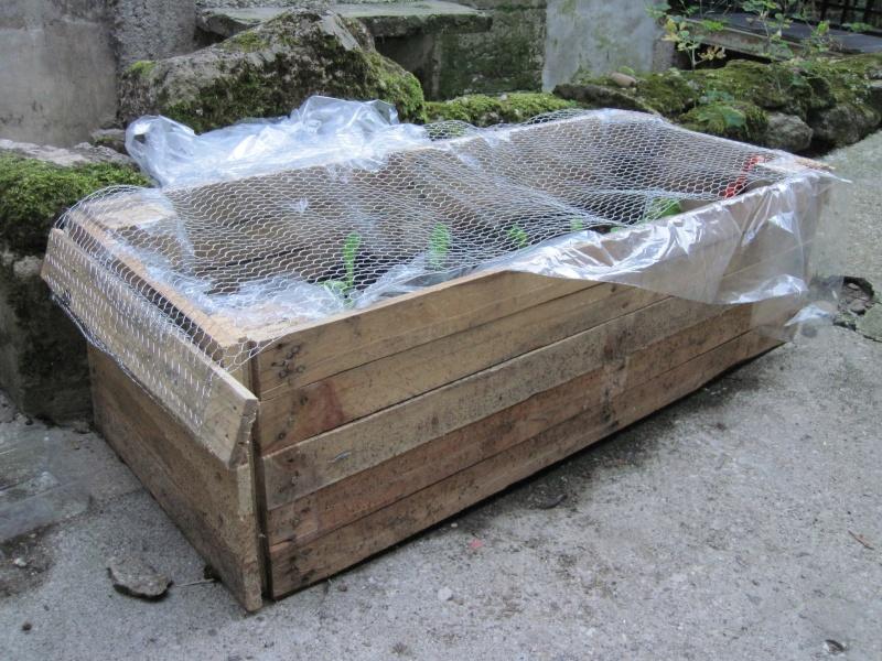 Exemple de Jardin surélevé. Img_1115