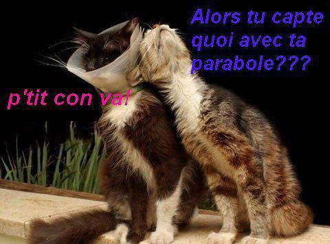 Insolite  animaux . - Page 4 Chat_c10