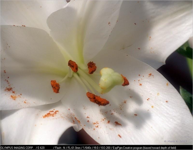 fleur de lis en son coeur  + 1 ajout - 13 05. P4015310