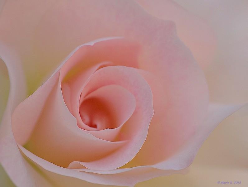 Rose pastel  P6160210