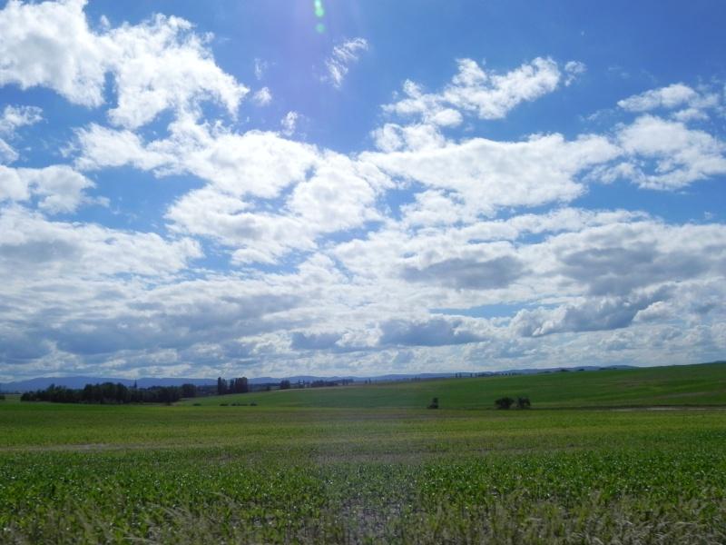 IMPORTANT :Visite chez deux éleveurs  alsaciens le 22 juin - Page 2 Dscn0337