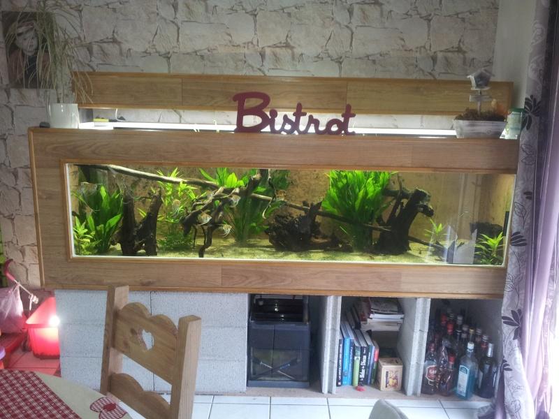 aquarium  bois de 1 600 Lts 20130413