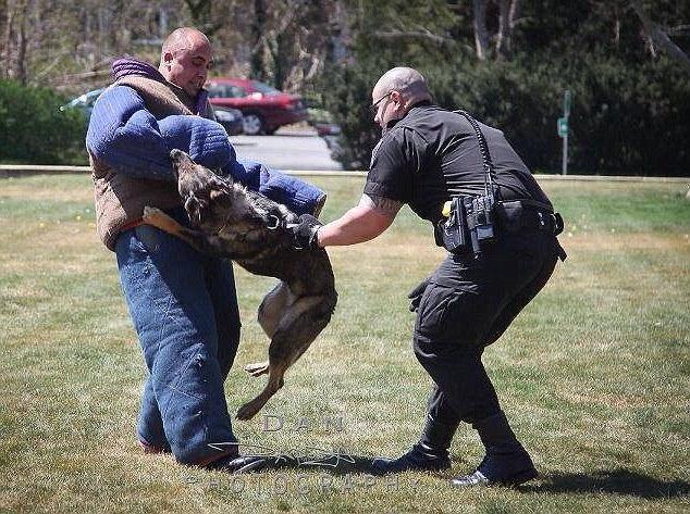 Moment prekës, ky qen po lë detyrën (Foto) 5009710