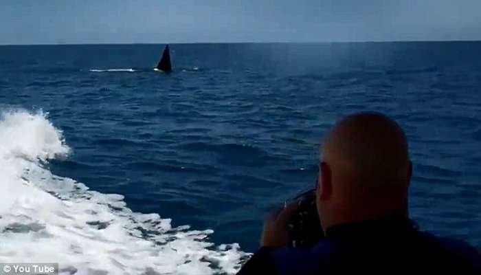 Balena vrasëse ndjek për një orë varkën e çiftit që festonte 20-vjetorin  Balena19