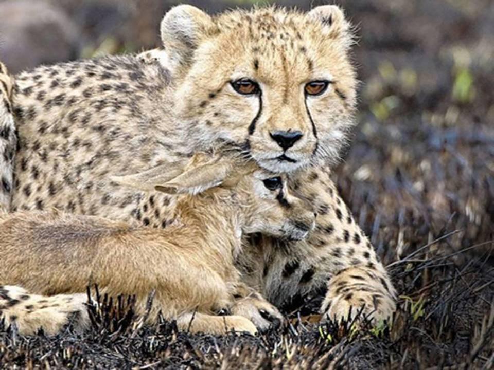 Edhe kafshet kan ndjenja Foto_k10