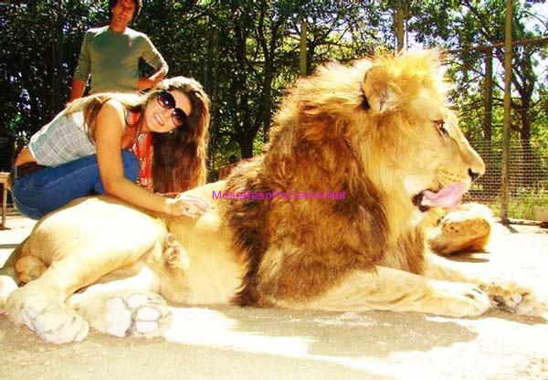 Kopshti zoologjik më i 'çmendur' në botë Luan13