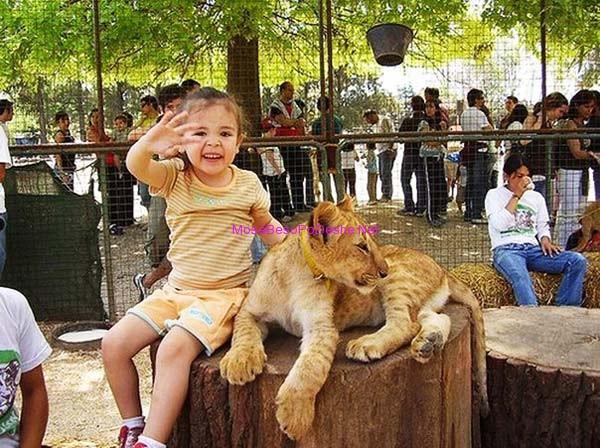 Kopshti zoologjik më i 'çmendur' në botë Luan_i13
