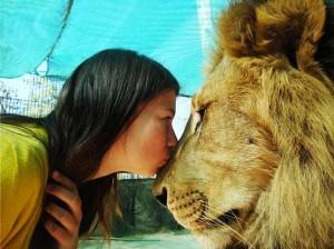 Kopshti zoologjik më i 'çmendur' në botë Luani17