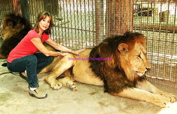 Kopshti zoologjik më i 'çmendur' në botë Luani18