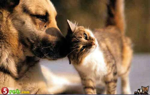 Edhe kafshet kan ndjenja Maci11