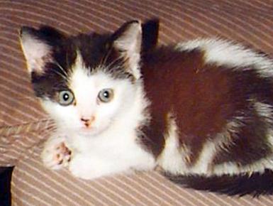 Macja shpëton të zotin nga flakët Macja010
