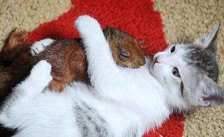 Edhe kafshet kan ndjenja Macja10