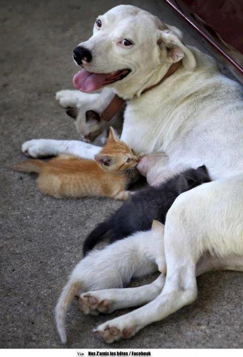 Edhe kafshet kan ndjenja Qeni_d11