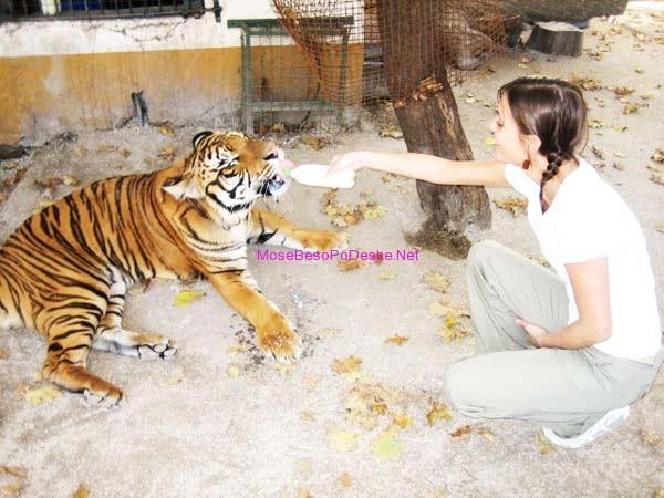 Kopshti zoologjik më i 'çmendur' në botë Tigri12
