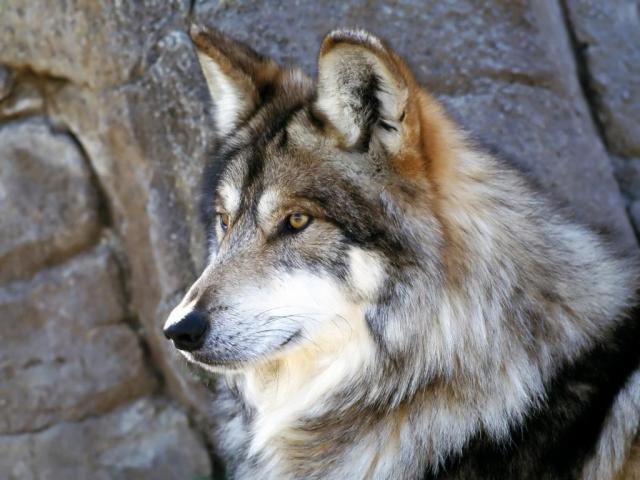 Foto Kafshesh - Faqe 2 Ujku10