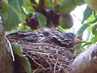 Jolis petits oiseaux... ou grands : 2ème partie - Page 15 Img05810