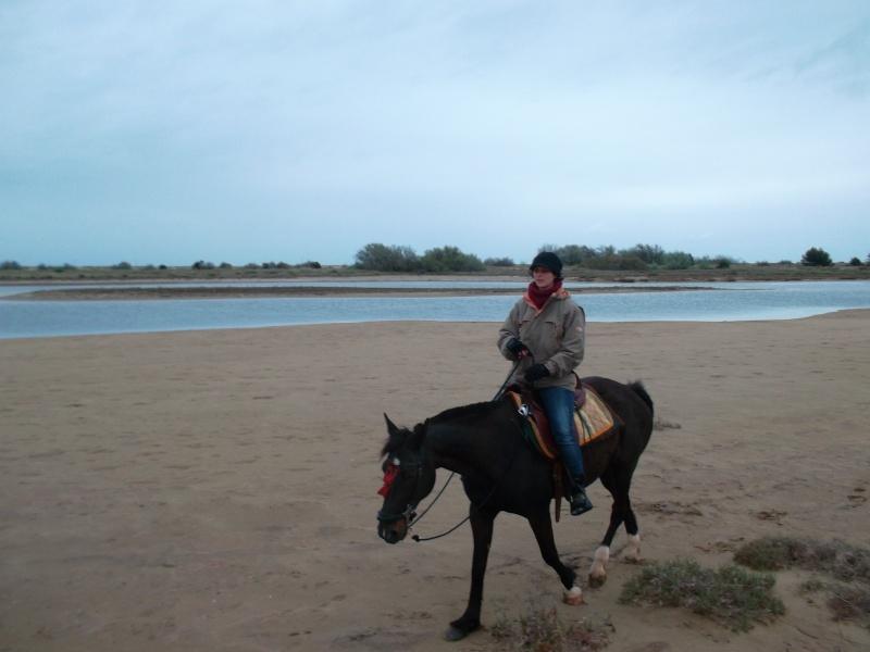 squatter avec deux chevaux a cote de la plage gruissan?  Sam_1614
