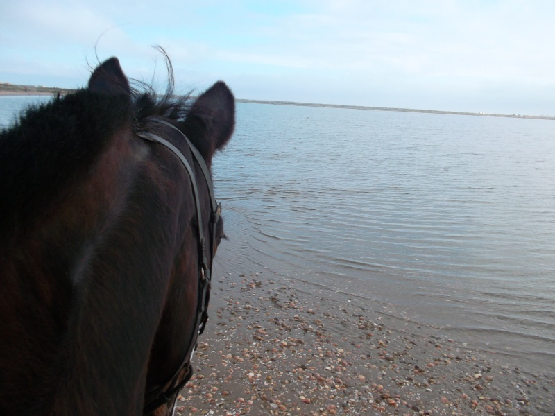 squatter avec deux chevaux a cote de la plage gruissan?  Sam_1814