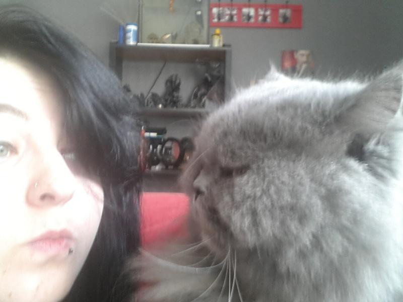 CÉDILLE chatte persan bleu 5 ans - en box vétérinaire 44 - Page 3 2013-014