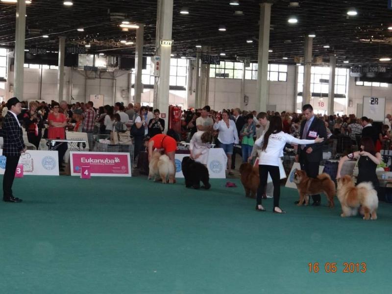 WORLD DOG SHOW 2013-BUDAPEST. 24909810
