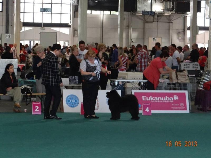WORLD DOG SHOW 2013-BUDAPEST. 94182010