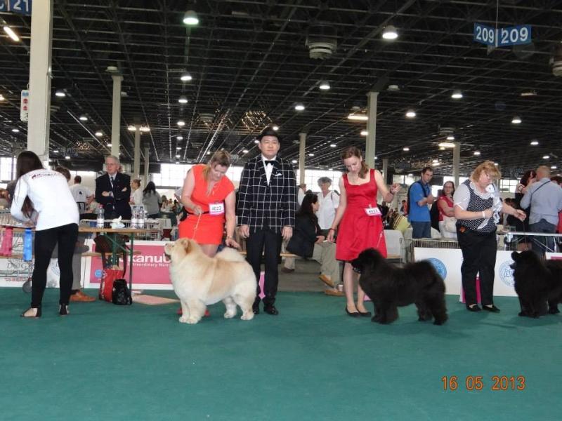 WORLD DOG SHOW 2013-BUDAPEST. 94435710