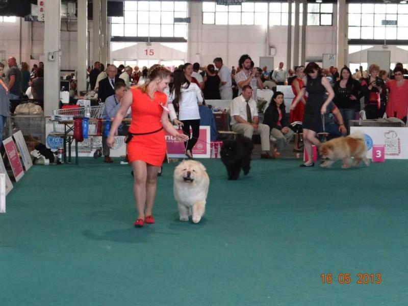 WORLD DOG SHOW 2013-BUDAPEST. 94566710