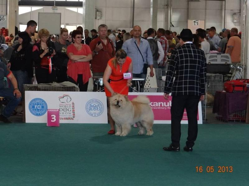 WORLD DOG SHOW 2013-BUDAPEST. 94718110