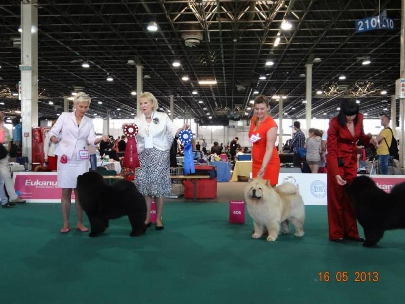 WORLD DOG SHOW 2013-BUDAPEST. 96949510