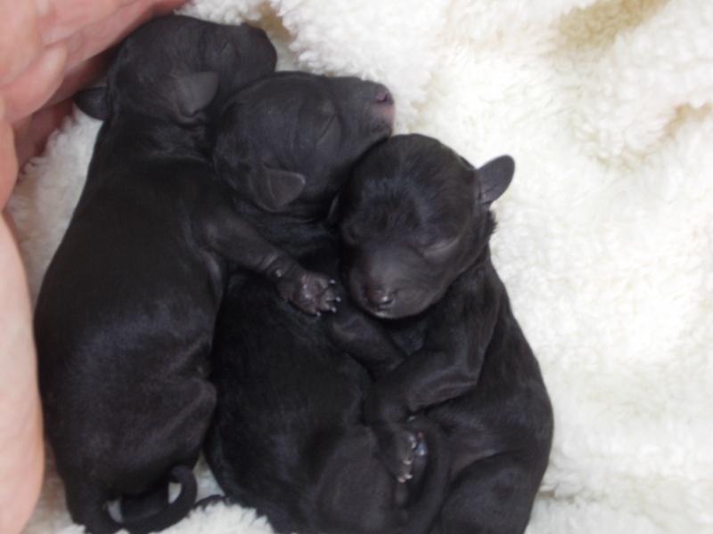 Baby pics!!!! Day one Dscn2911