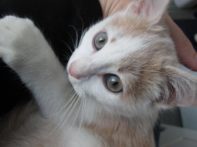 3 chatons à l'adoption (59) Img_2010
