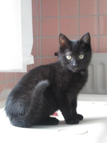 3 chatons à l'adoption (59) Img_2013