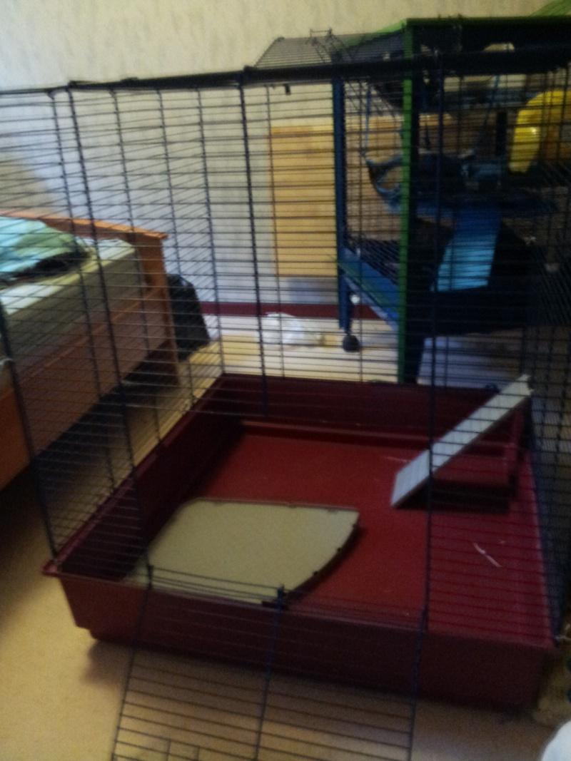 Vend cage furet XL [59] 20130511