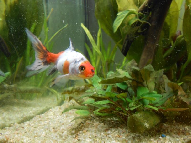 Le 210 litres des poissons rouges (Nouveau Départ : page 22) - Page 18 Dscn0711