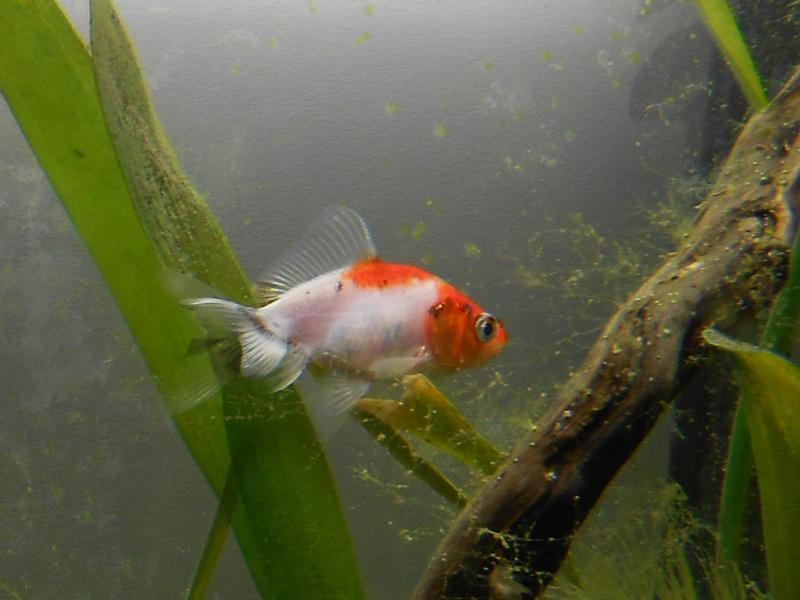 Le 210 litres des poissons rouges (Nouveau Départ : page 22) - Page 18 Rscn0710