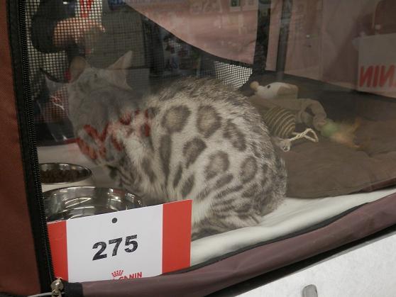 Salon chiens et chats 2013 PARIS - Page 4 P4280120