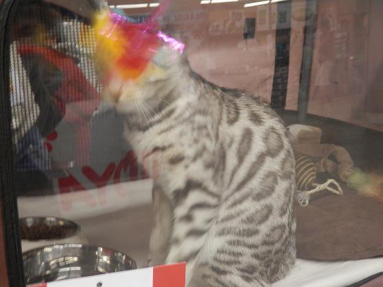 Salon chiens et chats 2013 PARIS - Page 4 P4280121