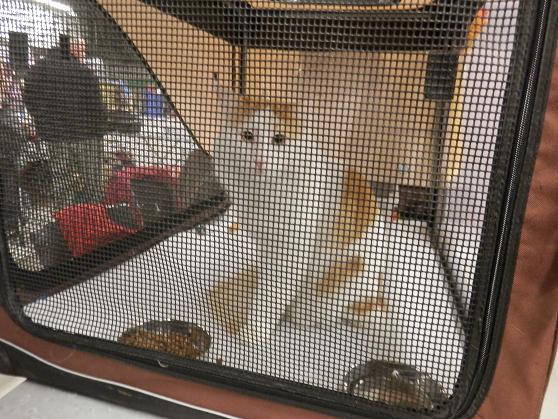 Salon chiens et chats 2013 PARIS - Page 4 P4280218