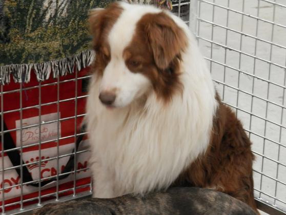 Salon chiens et chats 2013 PARIS - Page 4 P4280224