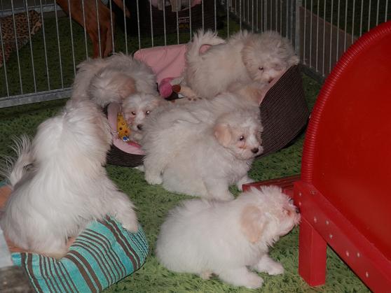 Salon chiens et chats 2013 PARIS - Page 4 P4280230