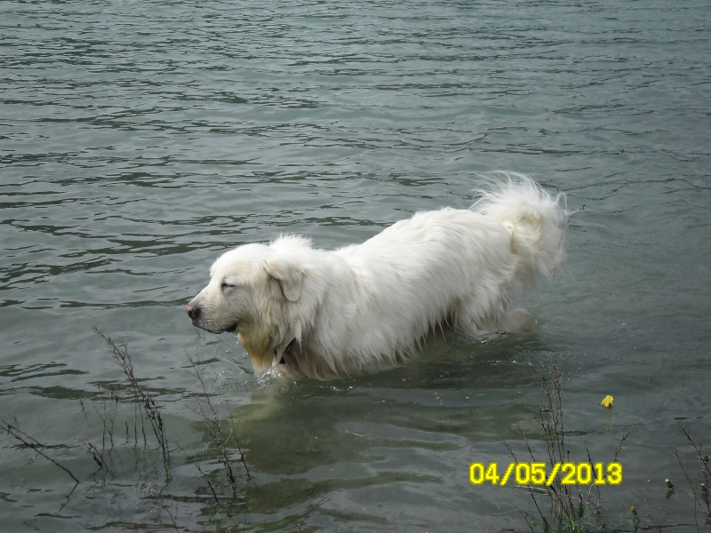 Photo de vos chiens à la plage! - Page 2 Sam_2931