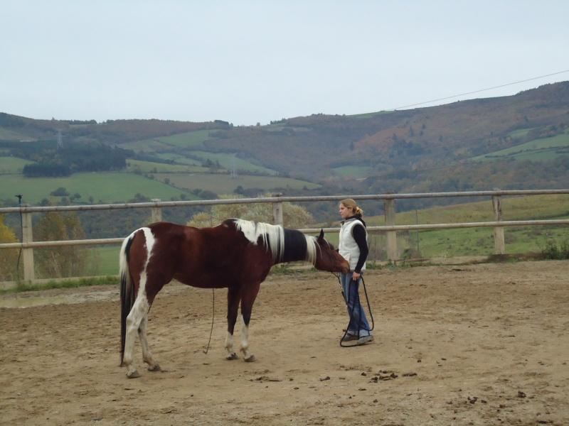Vends jument paint-horse Dsc01512