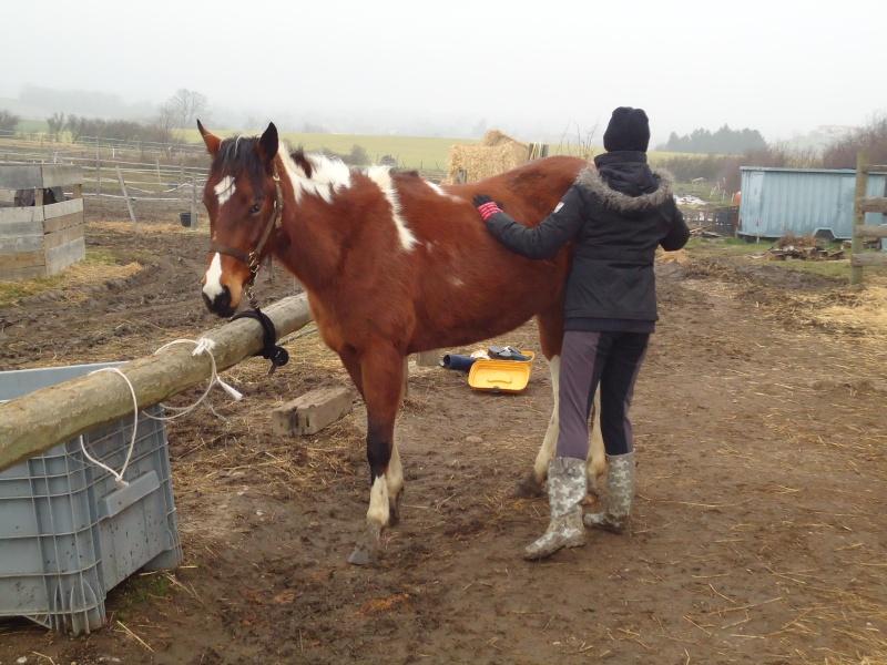 Vends jument paint-horse Dsc01910