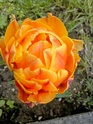 Thème du mois de Mai 2013 : Le printemps est enfin là ! Explosion de la nature Img_2015