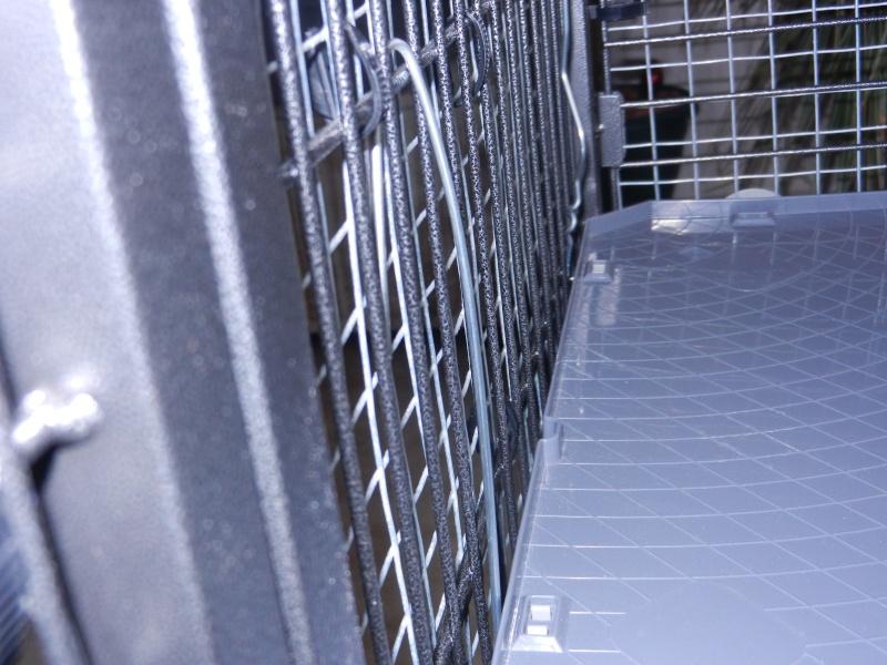 La cage tabby 1 Dscn1210