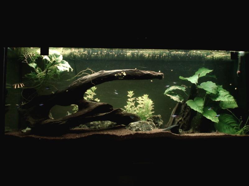 150L, Corydoras Sauvages! Aqua111